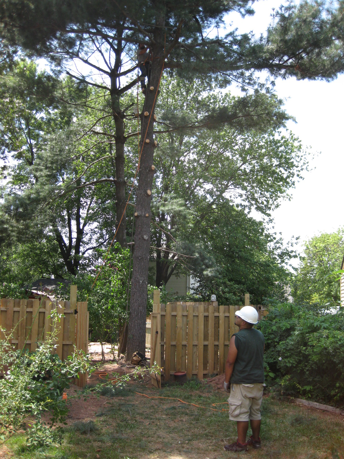 Tree Service Company Bristow Four Brothers Tree Landscaping